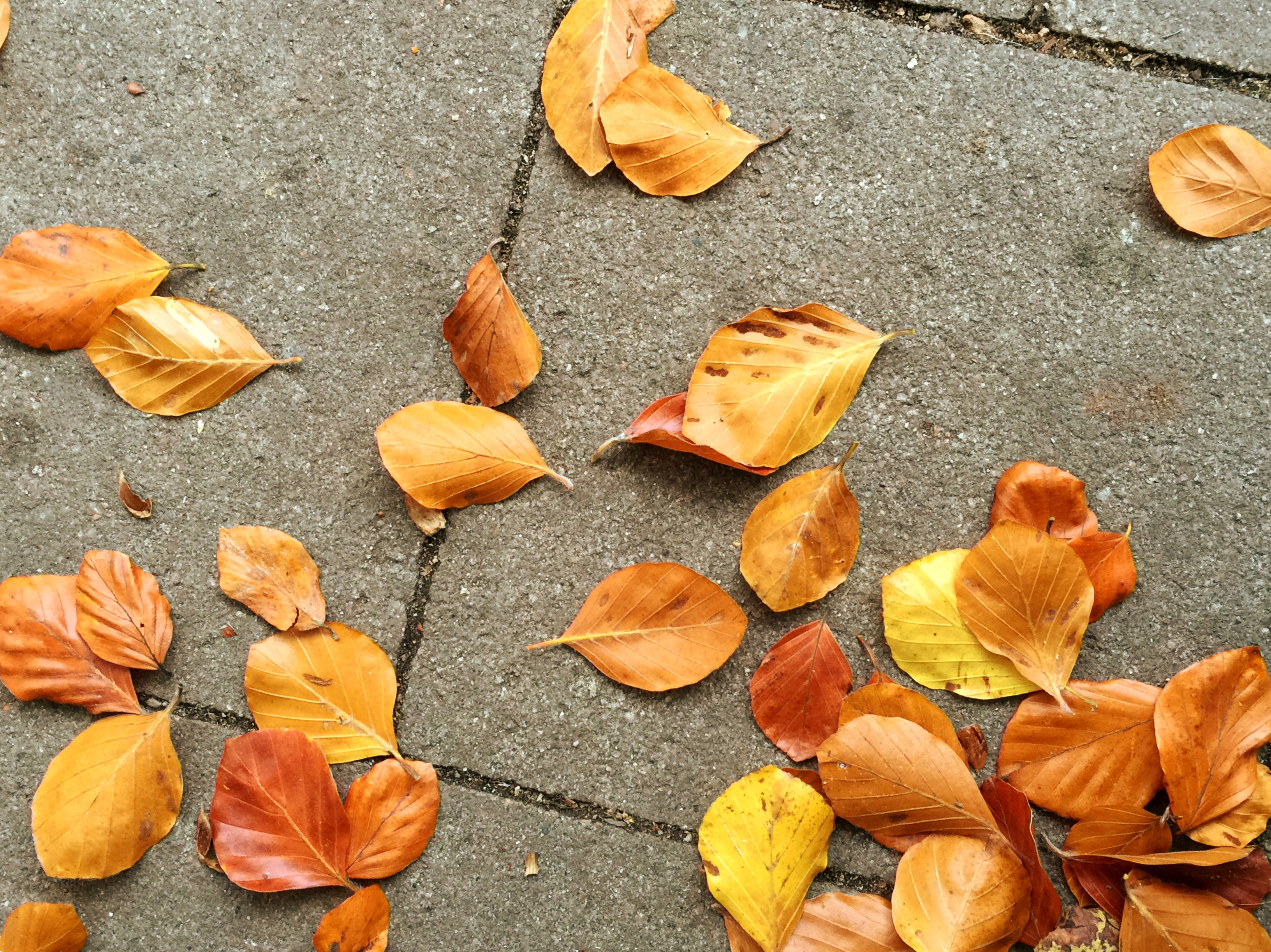 Herbstblätter, goldener Herbst