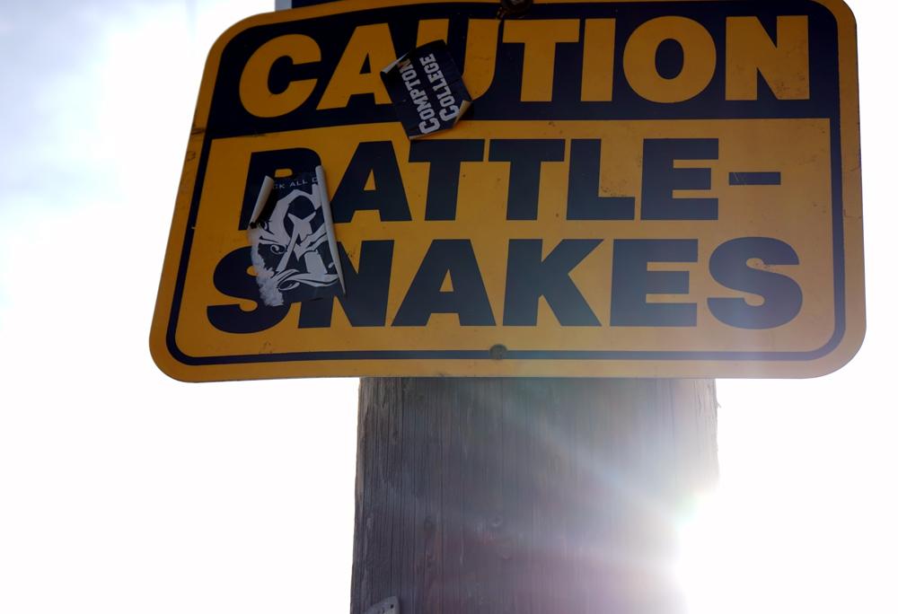 klapperschlangen im runyon canyon