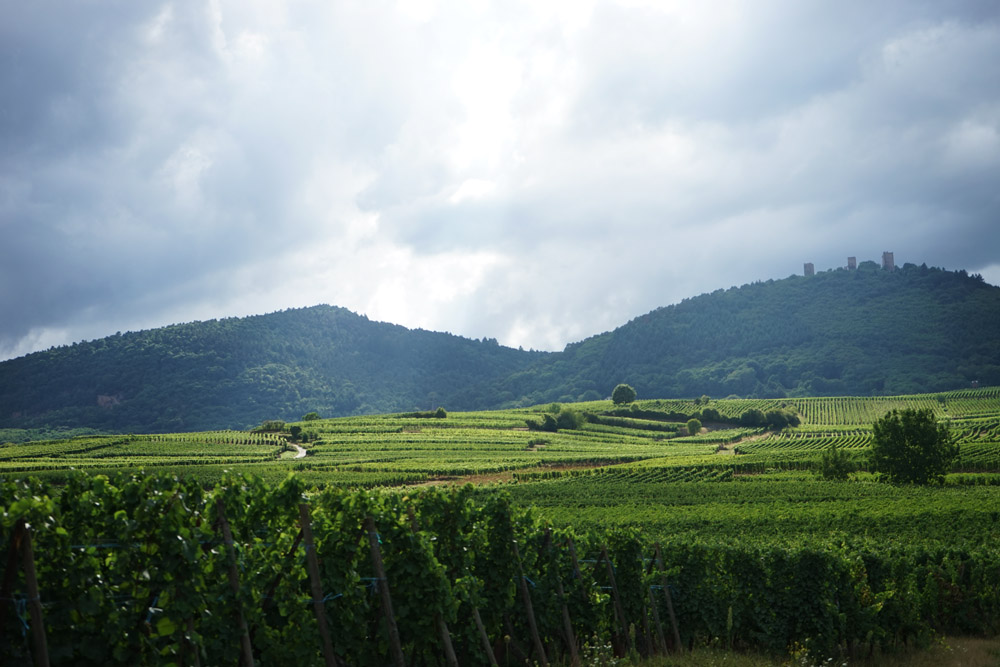troix chateaux, weinberge im elsass